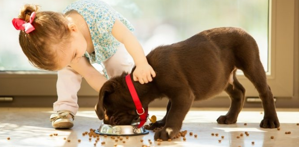 Mistakes in feeding dogs