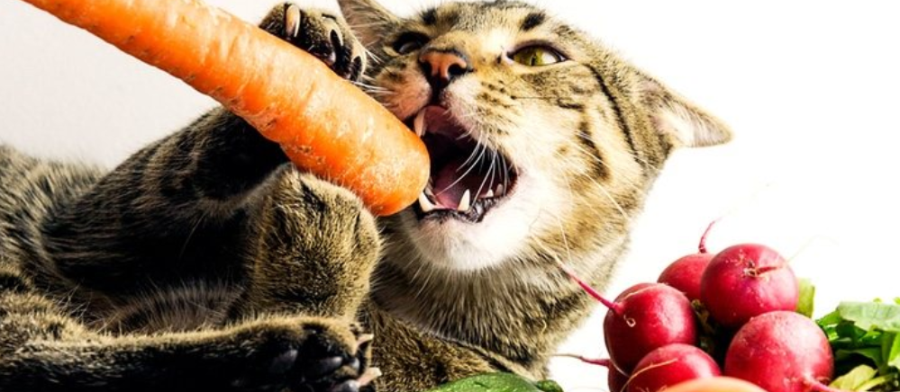 Fruits And Vegetables Cats Can Eat