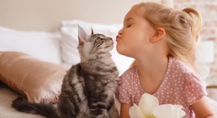 benefits Having A Cat