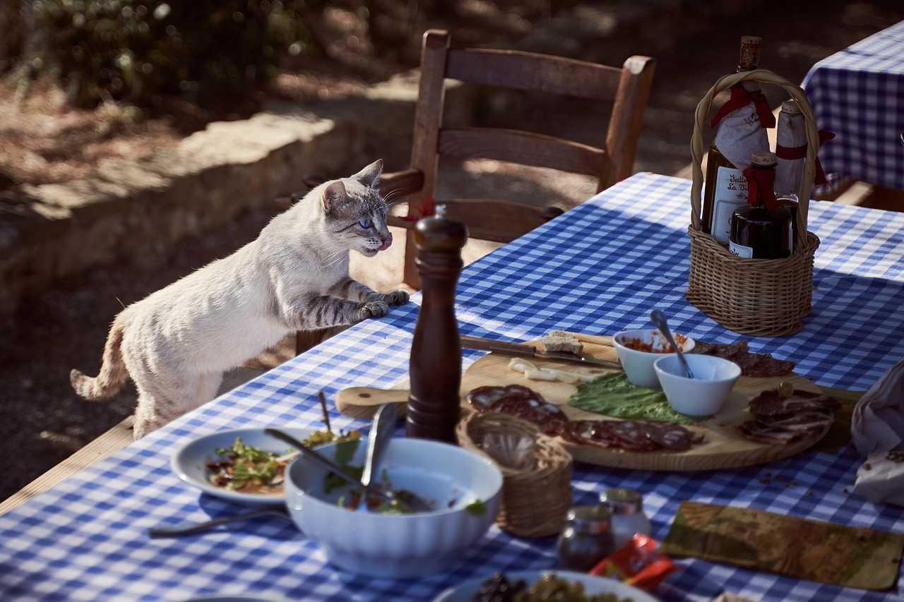 Nourishment For Cats