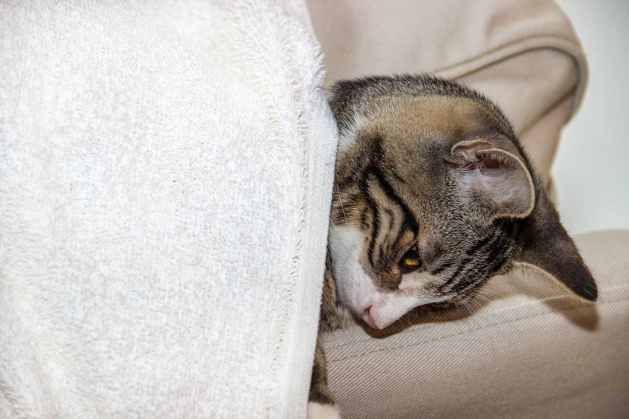 Diseases in Cats
