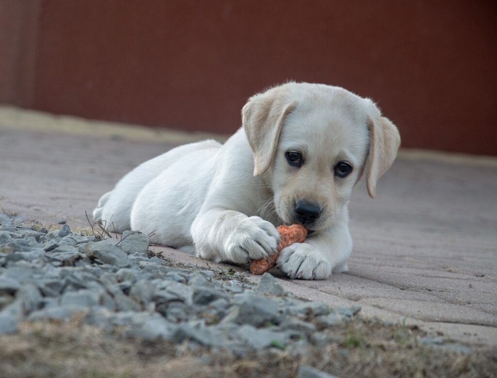 Organic Natural Dog Food, Human Foods, Give To Dog