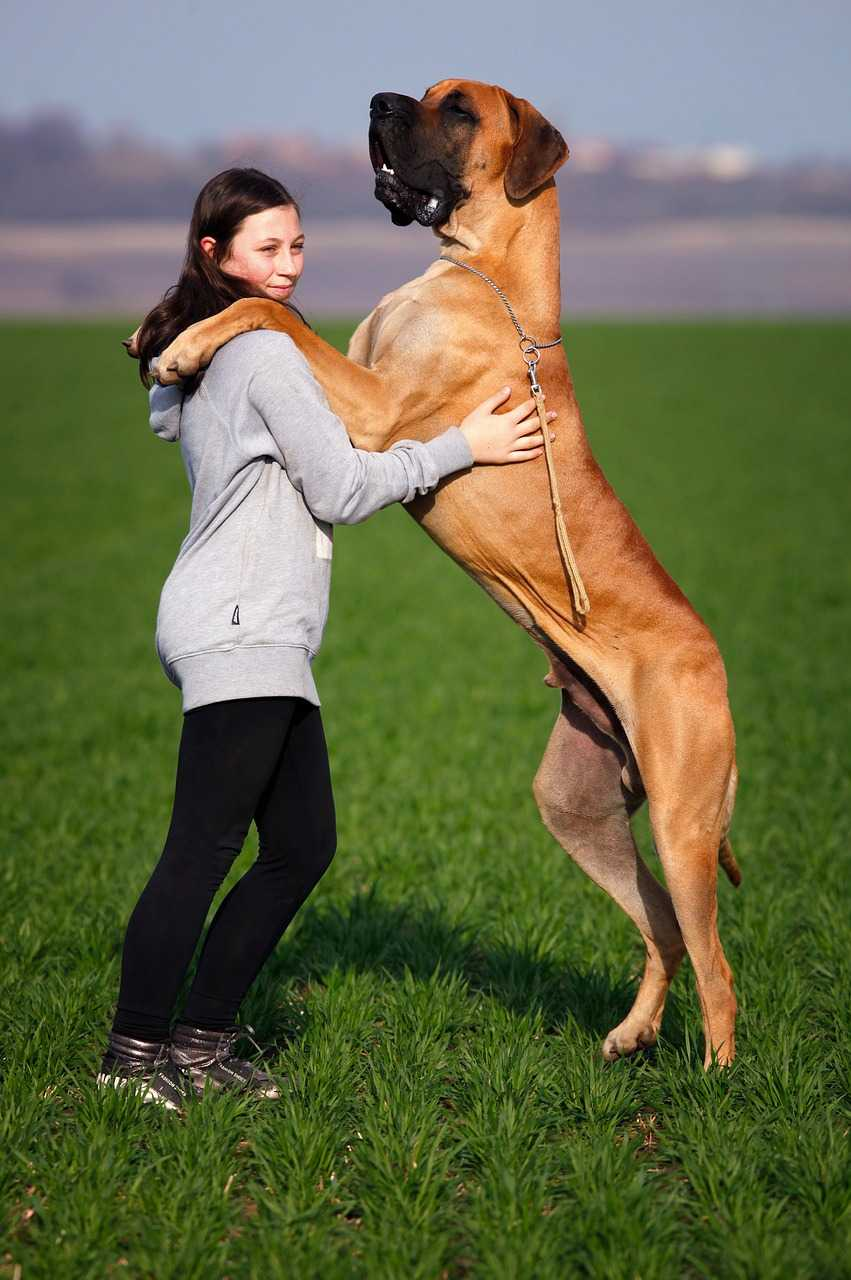 Great Dane Dog, types of dogs
