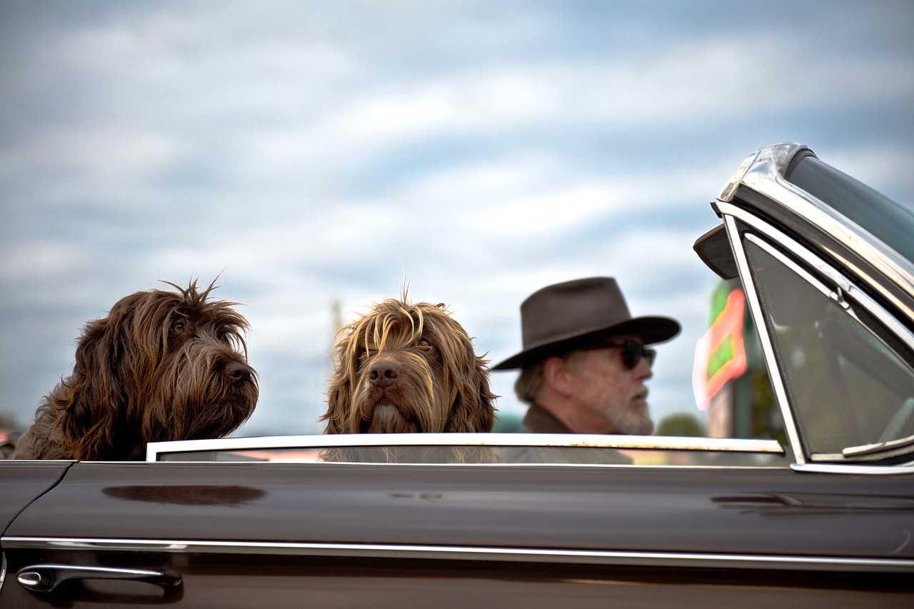 Travel,Vacations,Dog