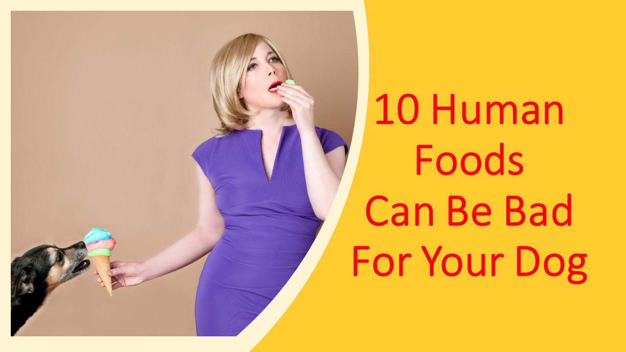 10 Human Foods Can Be Bad For Your