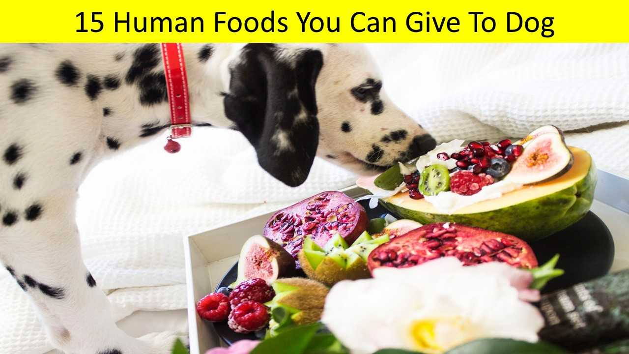 15 Human Foods You Can Give To Dog