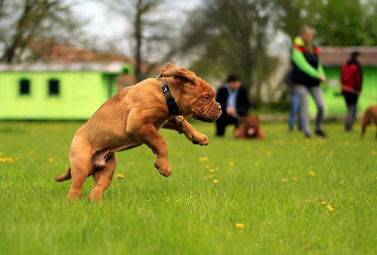 socializing puppy,exercising puppy