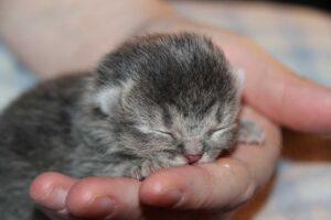 raising kittens
