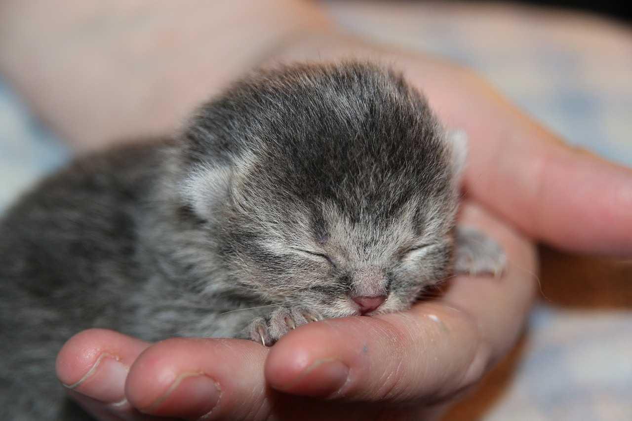 raising kittens- Newborn Cat
