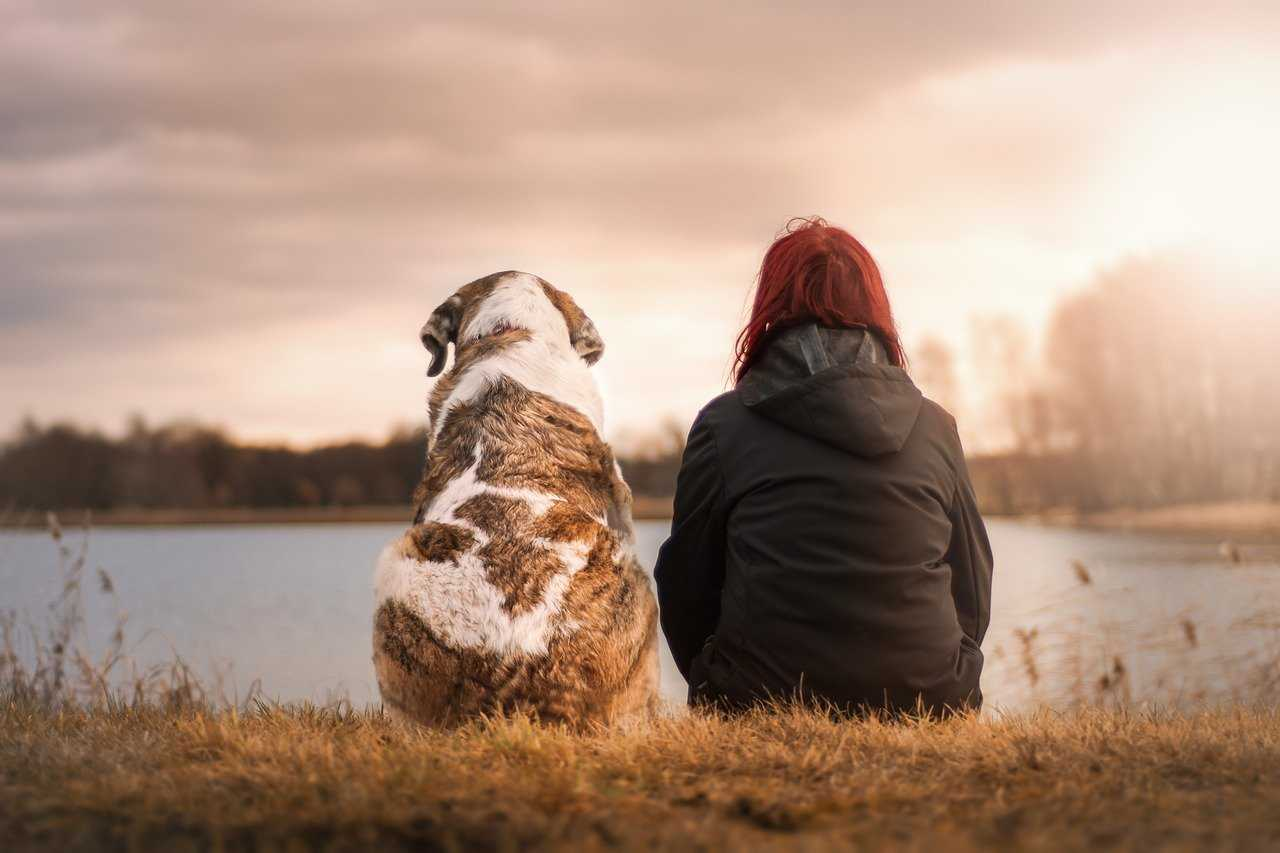 Benefits of raising dogs
