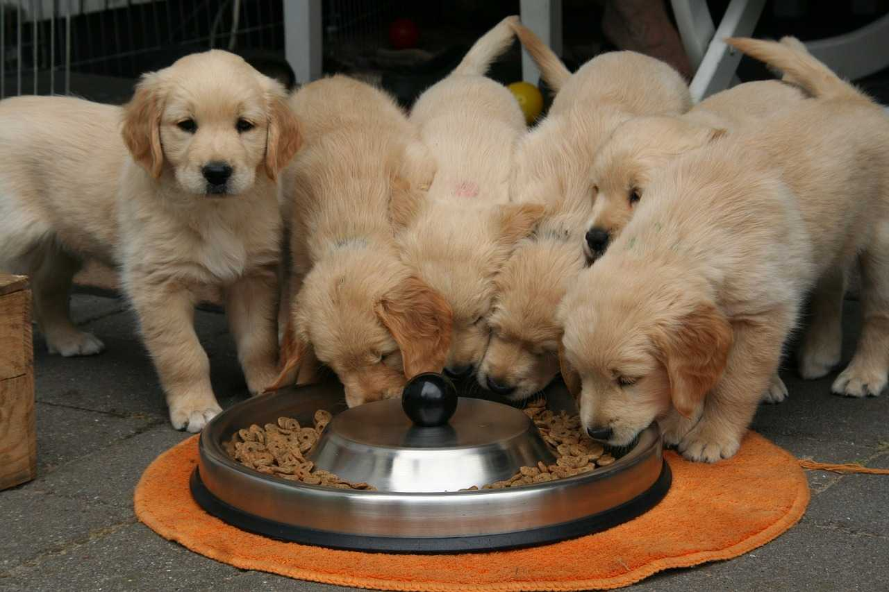 Nutrition for puppy, safety